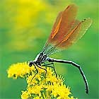 Biotopteiche entwickeln einen artenreichen Lebensraum