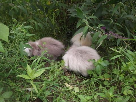 ROSE, LOUNA, CLEMENTINE: il y  a: les trois petites cochons, les trois frères, les trois mousquetaires, et... Les trois petits lapins ;-)