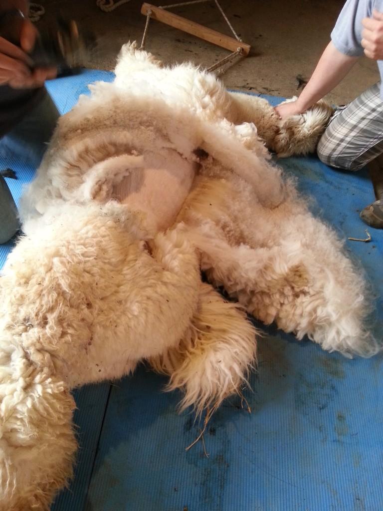und nochmals Wolle