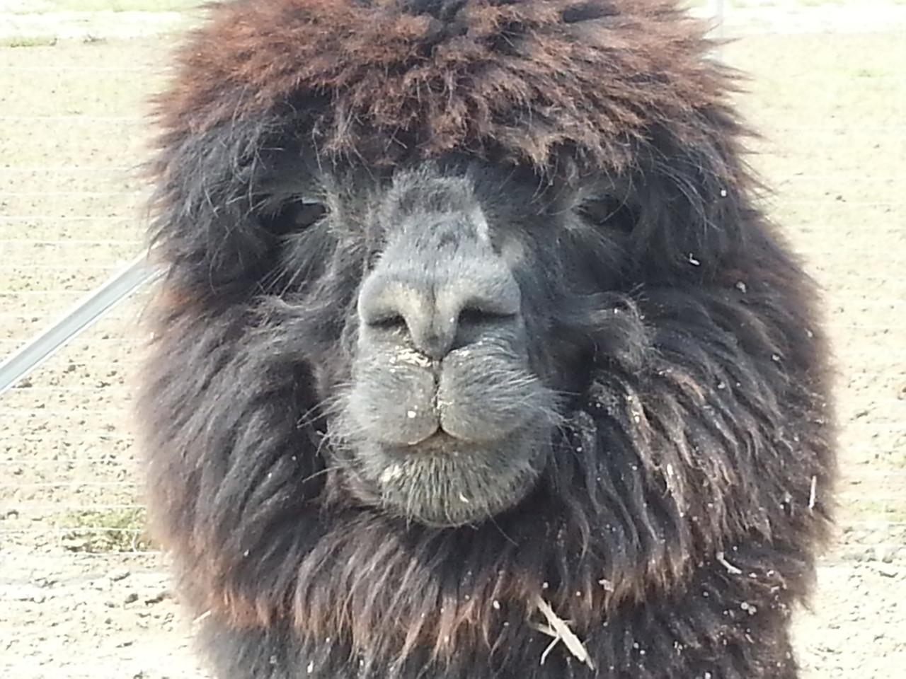 Das Ergebnis kann sich sehen lassen! Picchu, jetzt bist Du wirklich sehr hübsch!