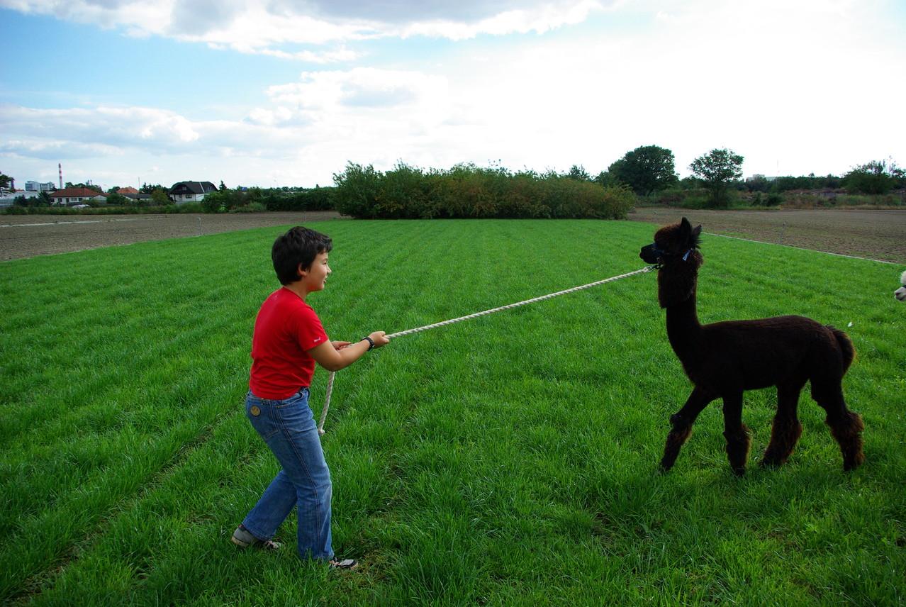 Nur mit Ruhe und Einfühlungsgabe kann man die Bereitschaft des Tieres gewinnen