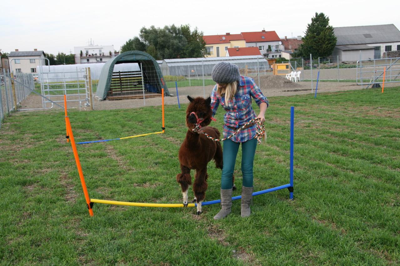 In spielerischer Form wird die Achtung vor dem Tier vermittelt und somit auch vor den Mitmenschen
