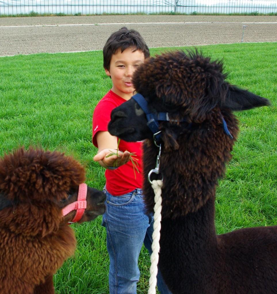 Freundschaften entstehen, gemeinsame Erlebnisse bleiben in positiver Erinnerung, für Mensch und Tier!