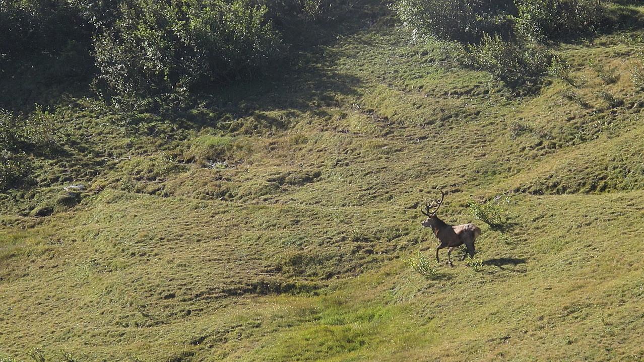 ein Hirsch in meiner nächsten Nähe...!