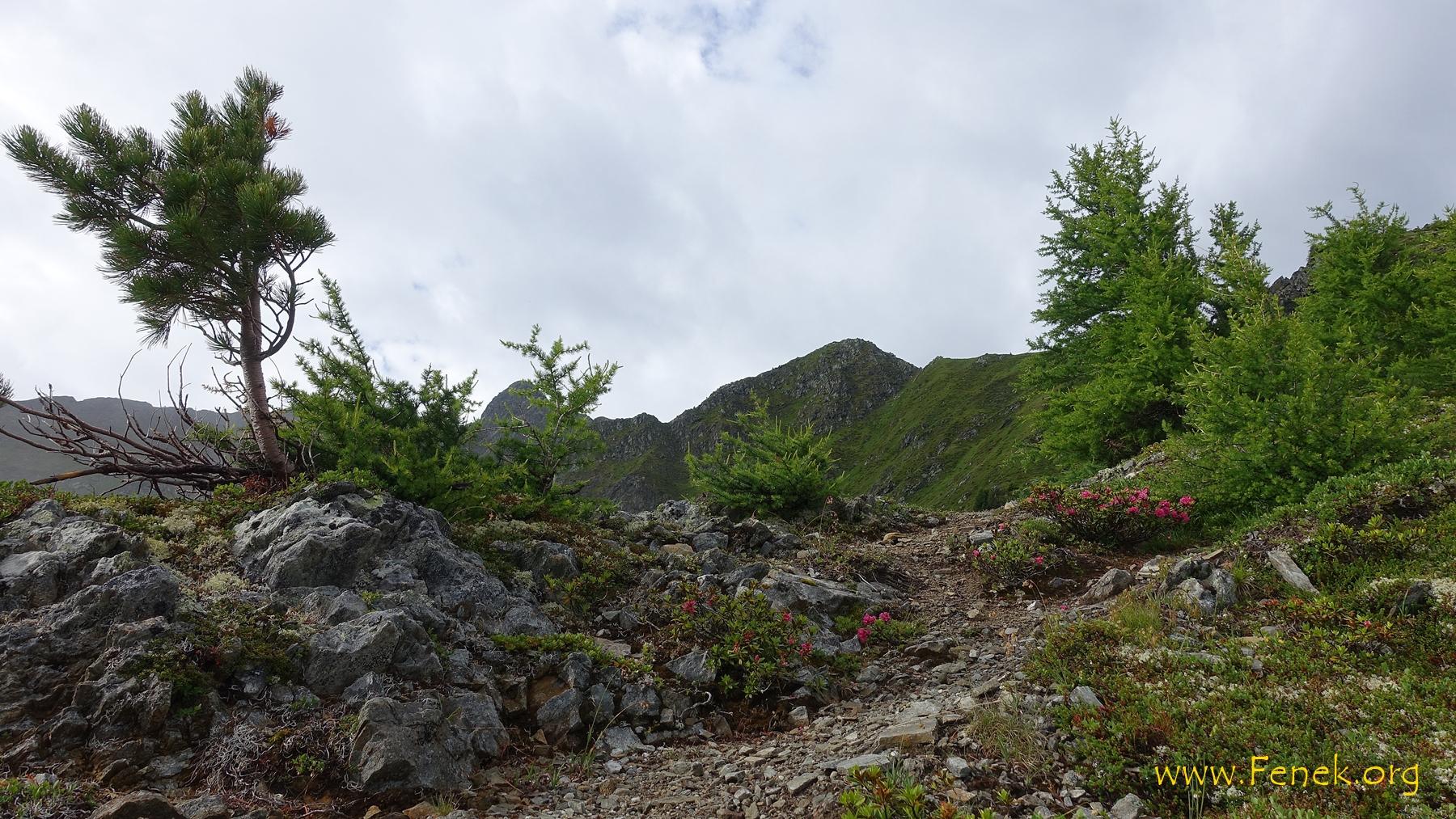 schöner Bergweg