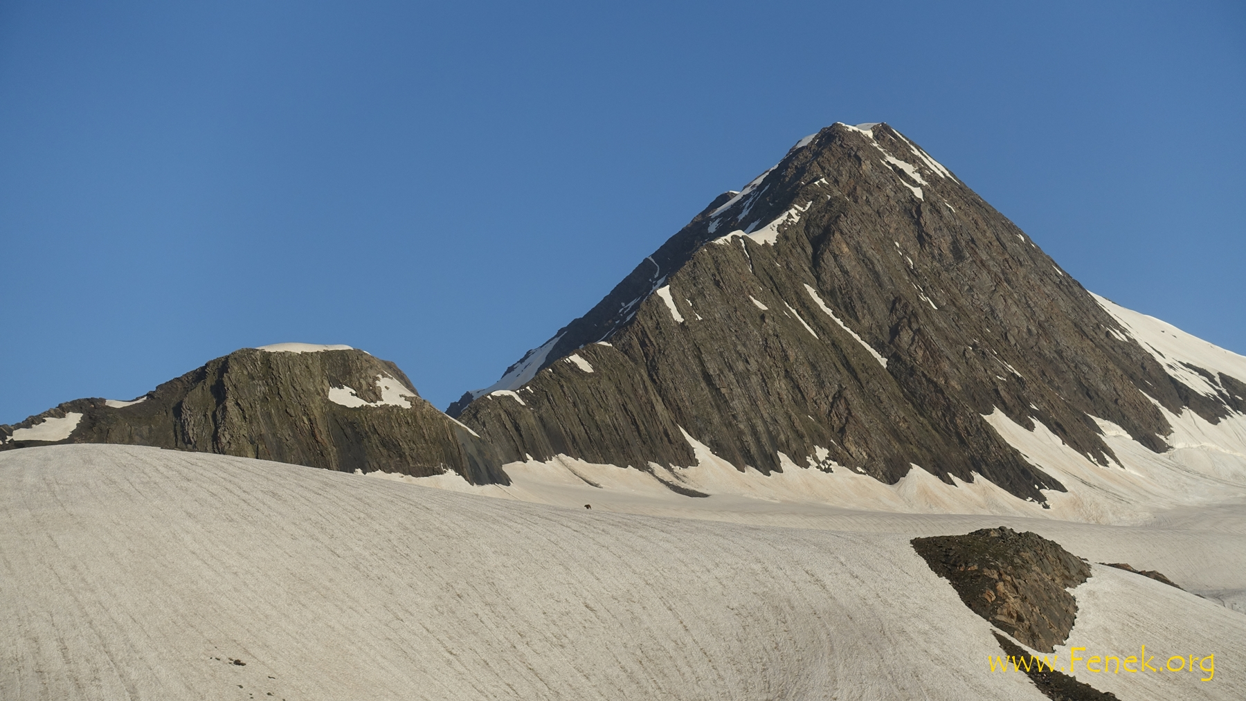 unser Gipfel und ein Tier auf dem Gletscher