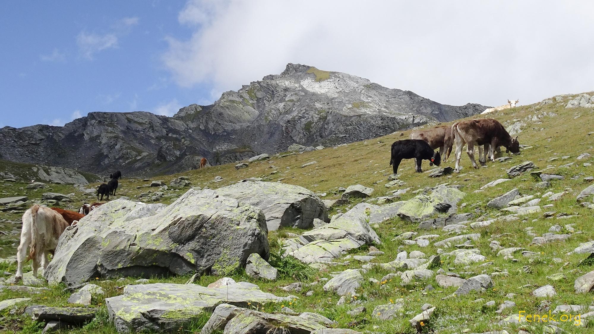wieder im grünen Bereich - Hintergrund Monts Telliers