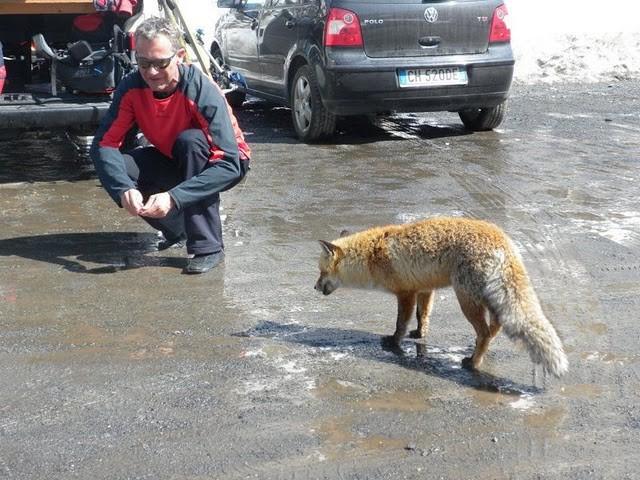 der letzte Landjäger wandert in des Fuchses Magen - Fenek und Fuchs :-))