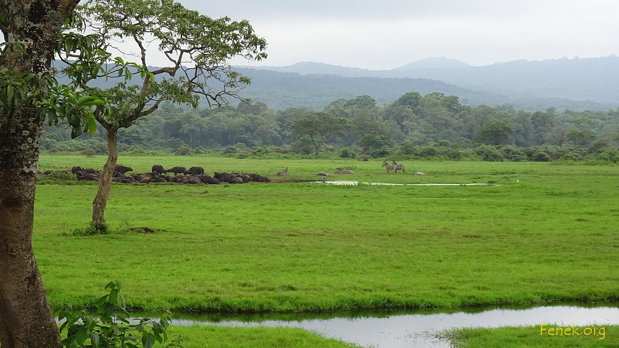 Zu Beginn begegneten wir Büffel- und Zebraherden