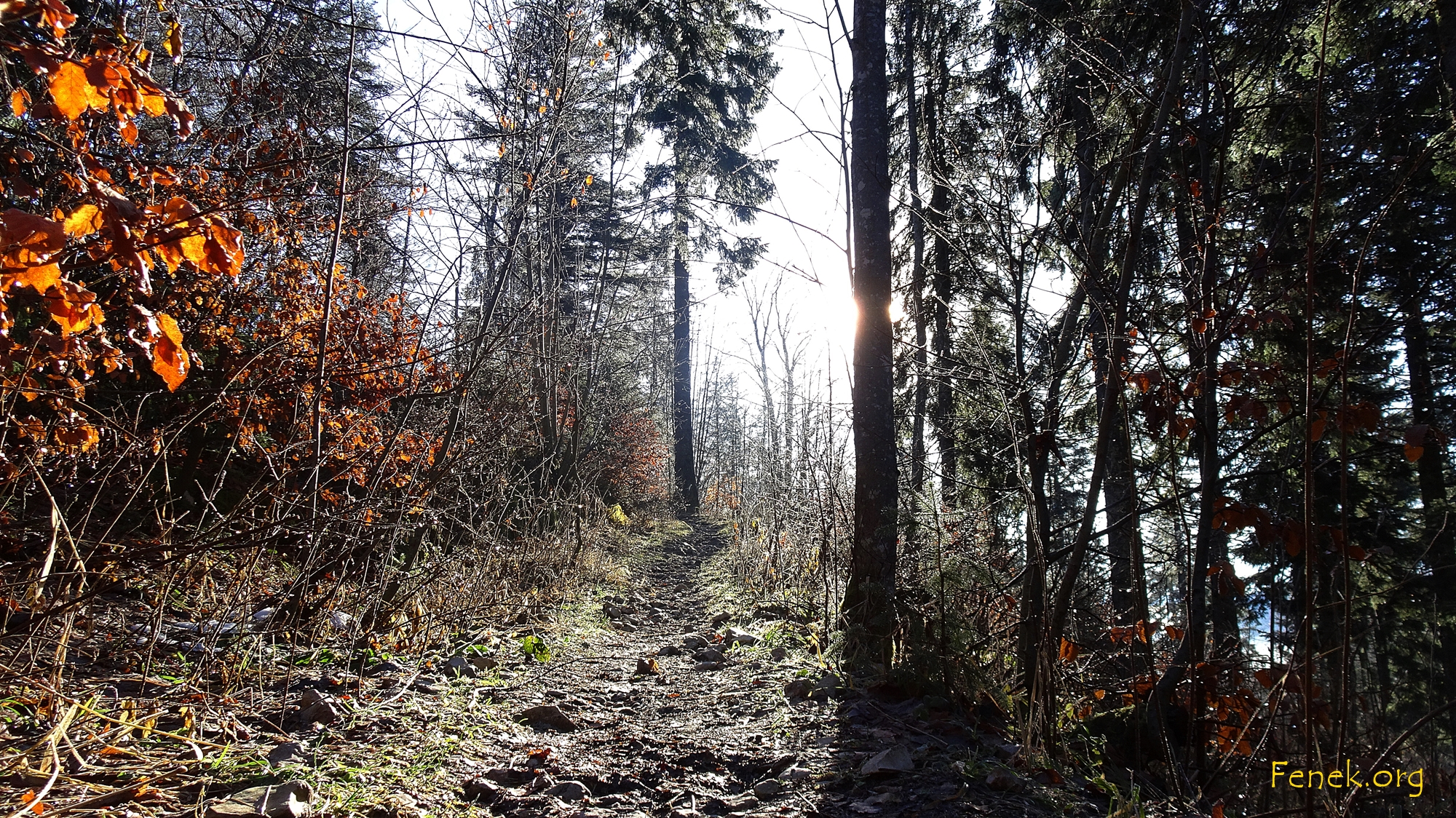 glitzernder Wald
