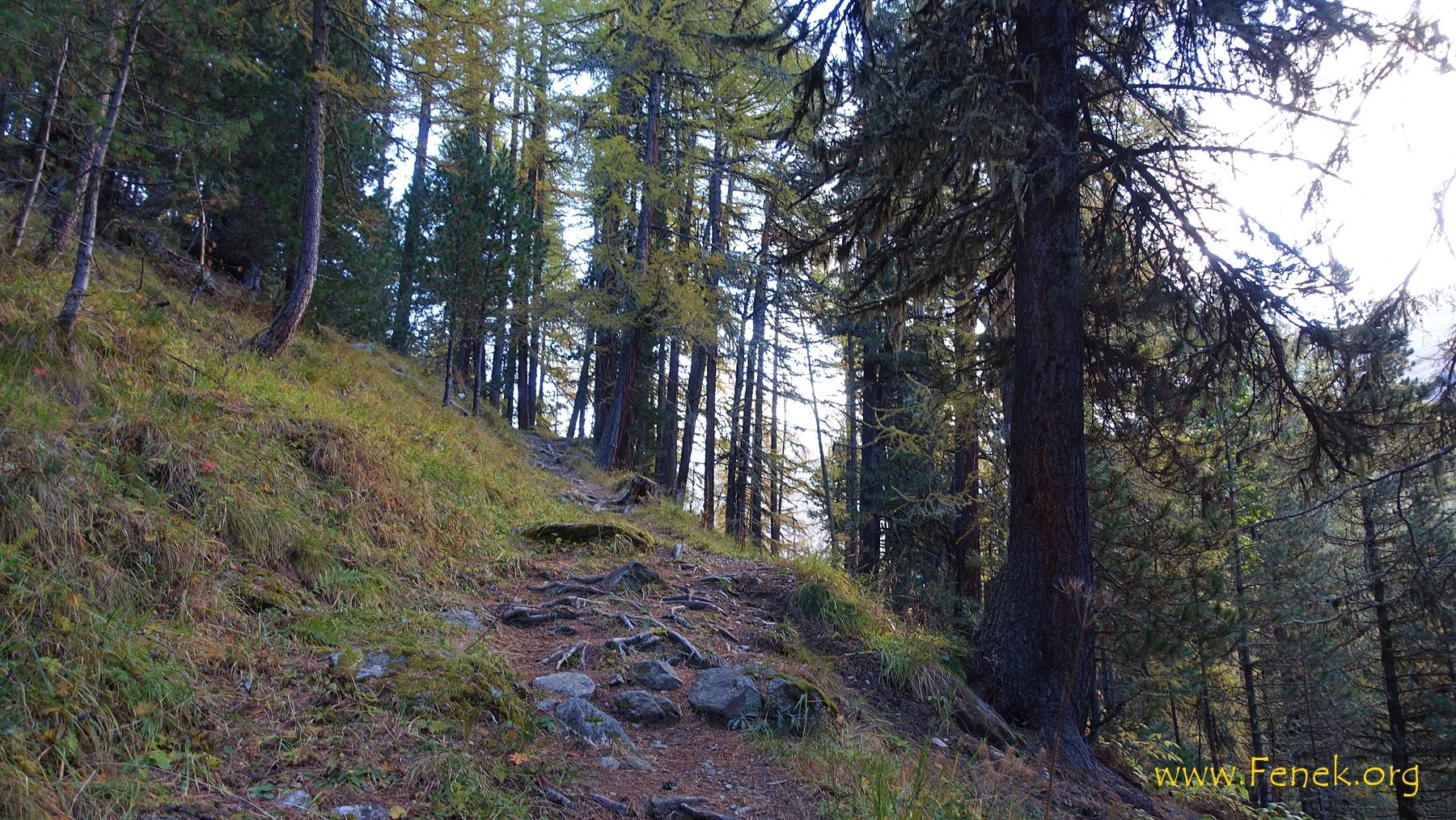 Aufstieg durch den bunten Wald