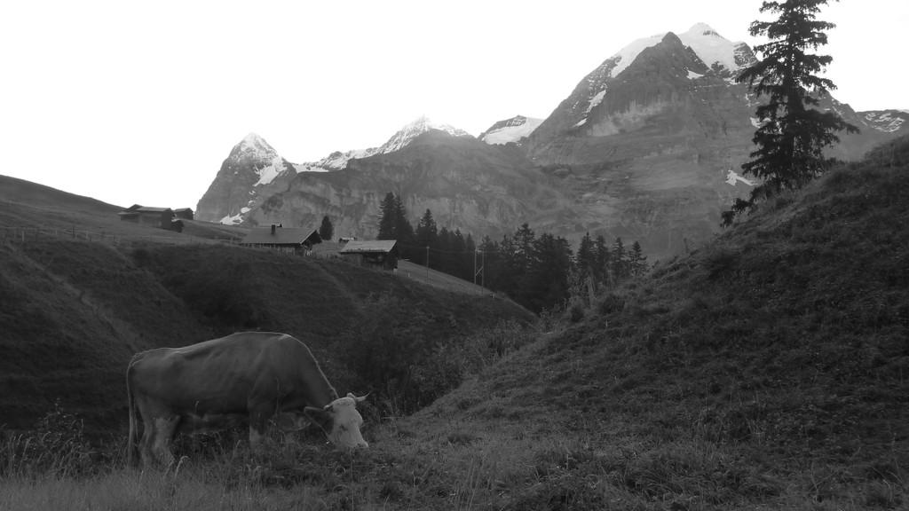 hier entsteht Schweizer Alpenmilch.... :-)