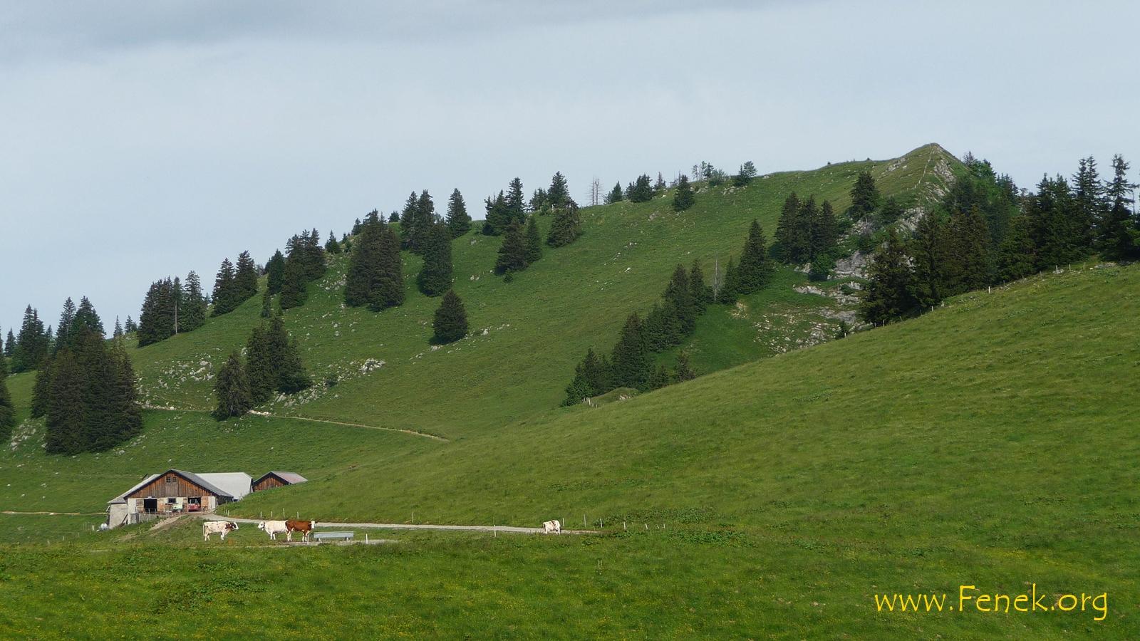 Alp Corjon und Gipfel Les VIllards