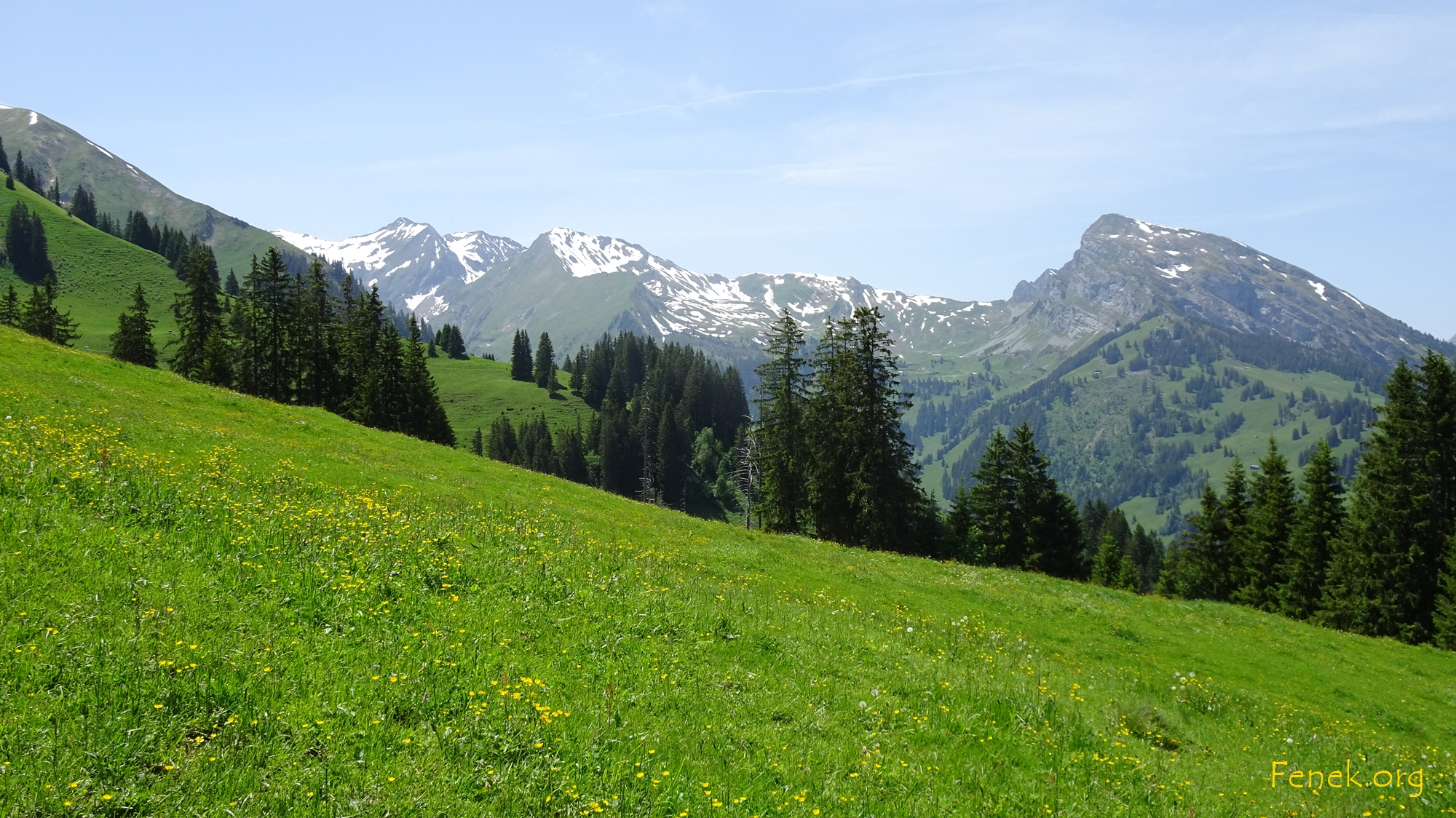 Sommerwiese im Diemtigtal - rechts Wierihore