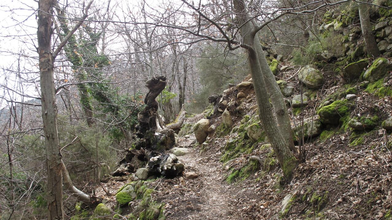 Märchenwald bei Marciana
