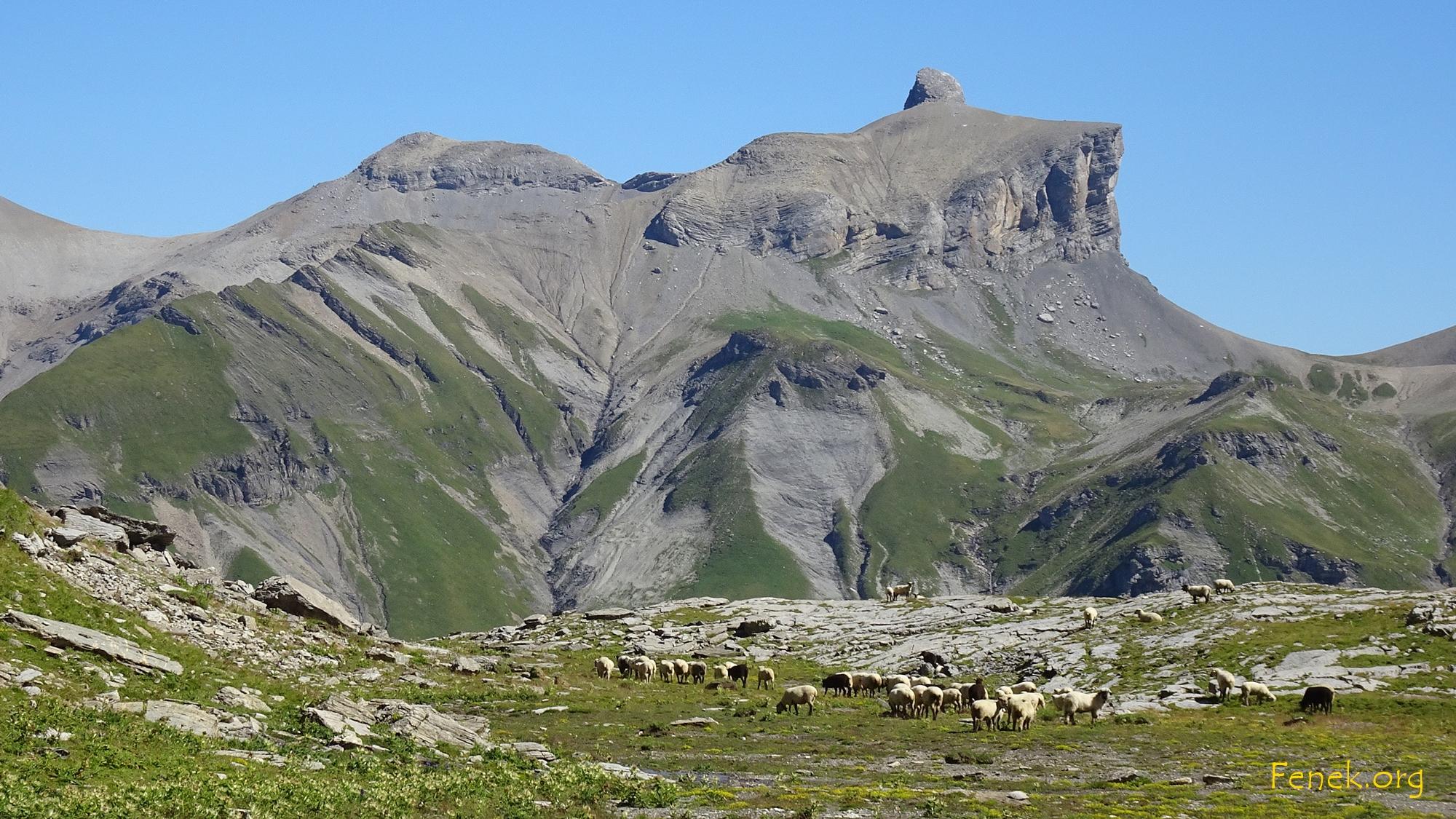 Schafe und Drättehorn
