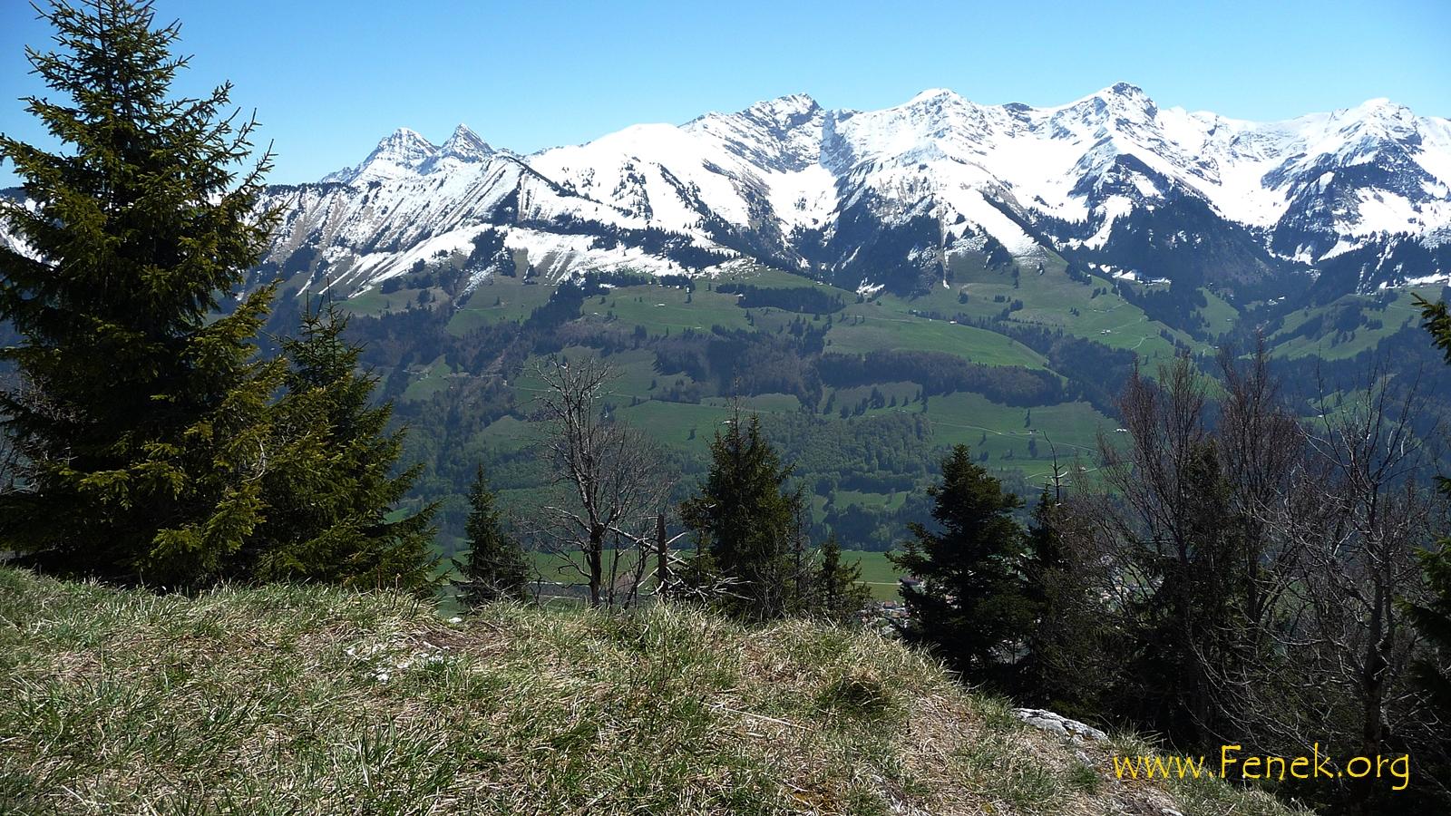 die schönsten und höchsten Freiburger!!