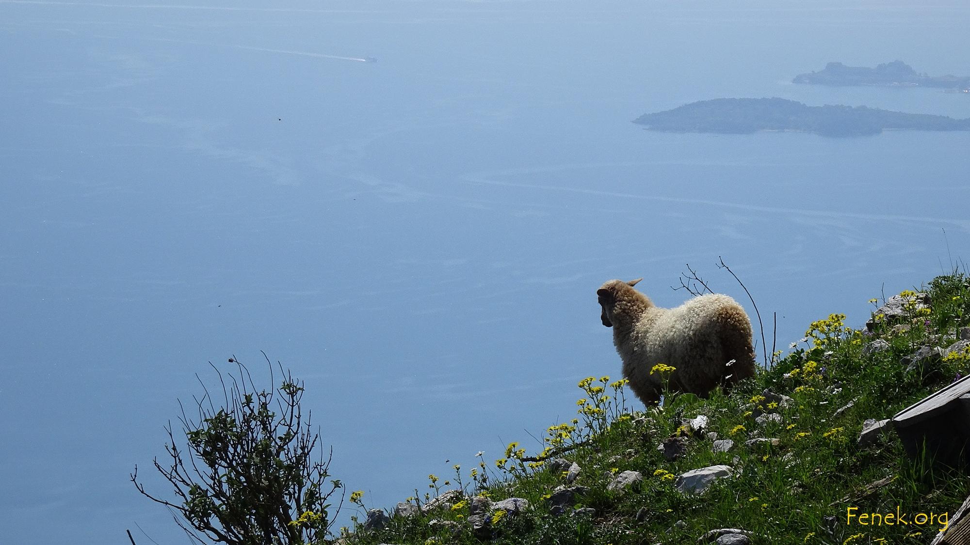 das Schaf geniesst auch den Ausblick ;-)