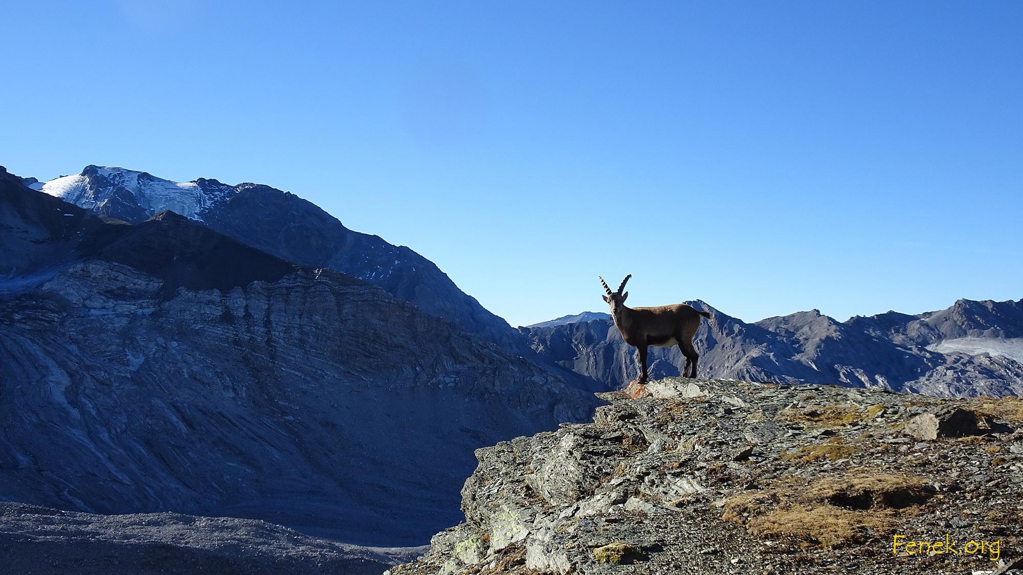 Begegnung am Monte Scorluzzo