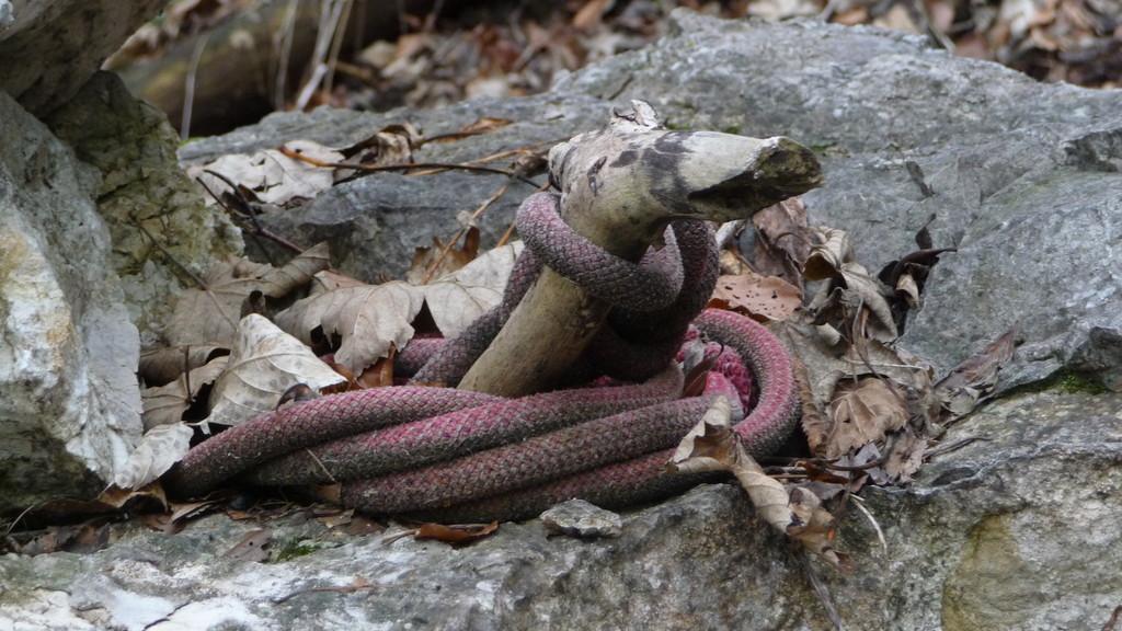 """eine """"Schlange"""""""