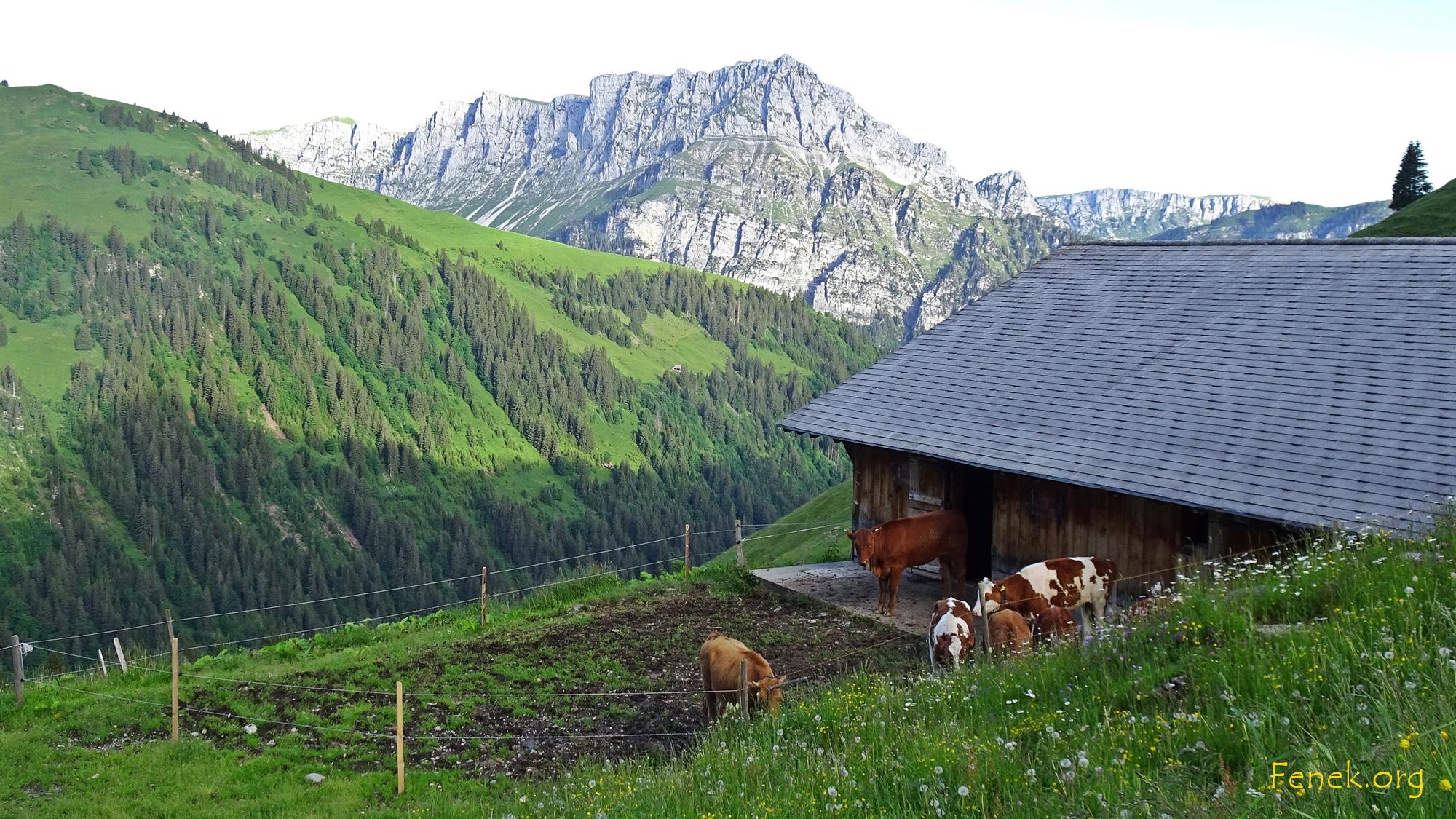 Stall mit gelangweilten Rindern - hinten Seehore