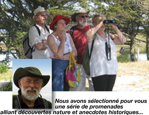 observation des oiseaux dans le parc du marquenterre