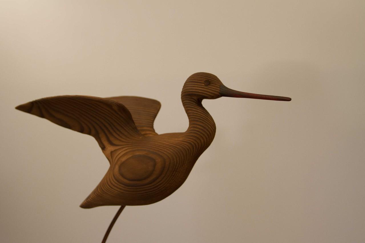 oiseau de bois: chevalier aboyeur en vol gros plan