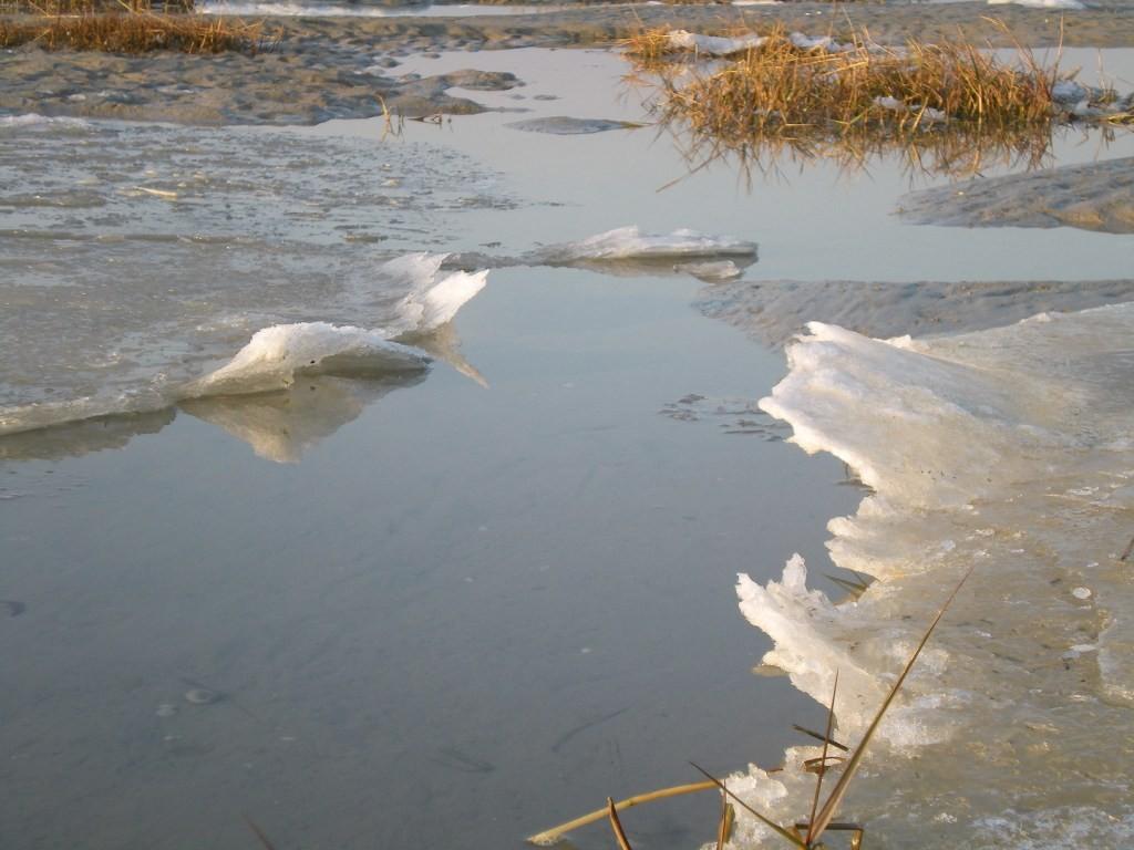 Le sel contenu dans l'eau de mer donne des formes inatendues à la glace