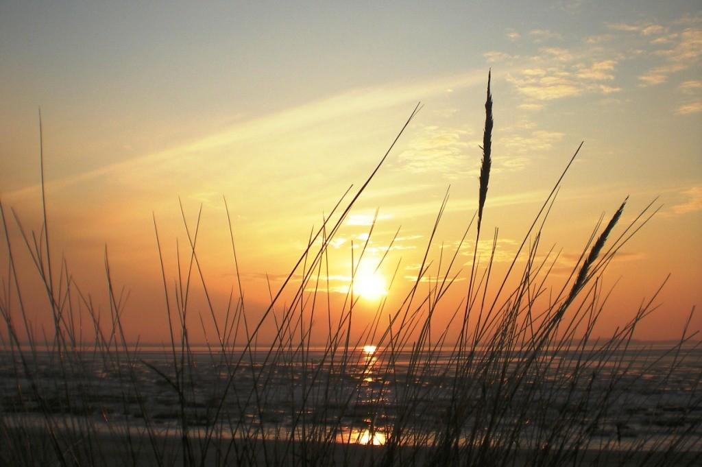Soleil couchant sur les oyats en baie de Somme