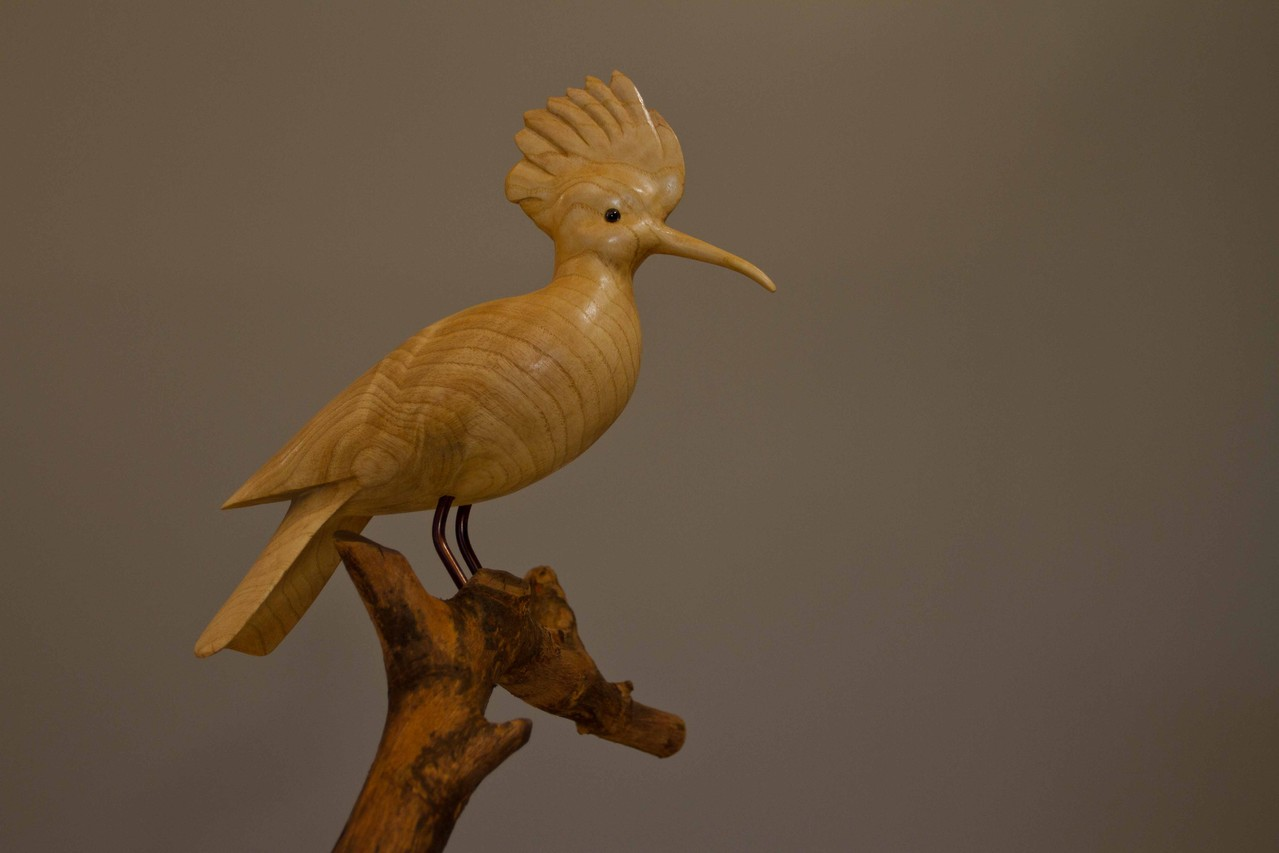 oiseau de bois: Huppe fasciée frene