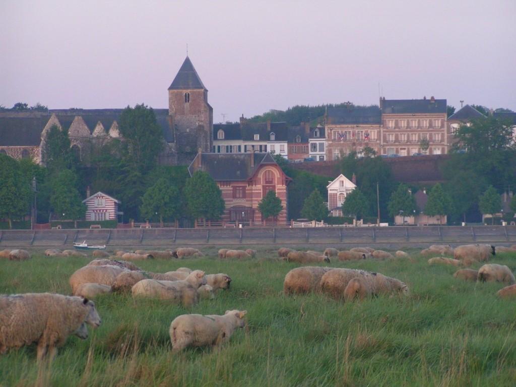 Saint Valéry sur Somme et ses moutons de pré salé