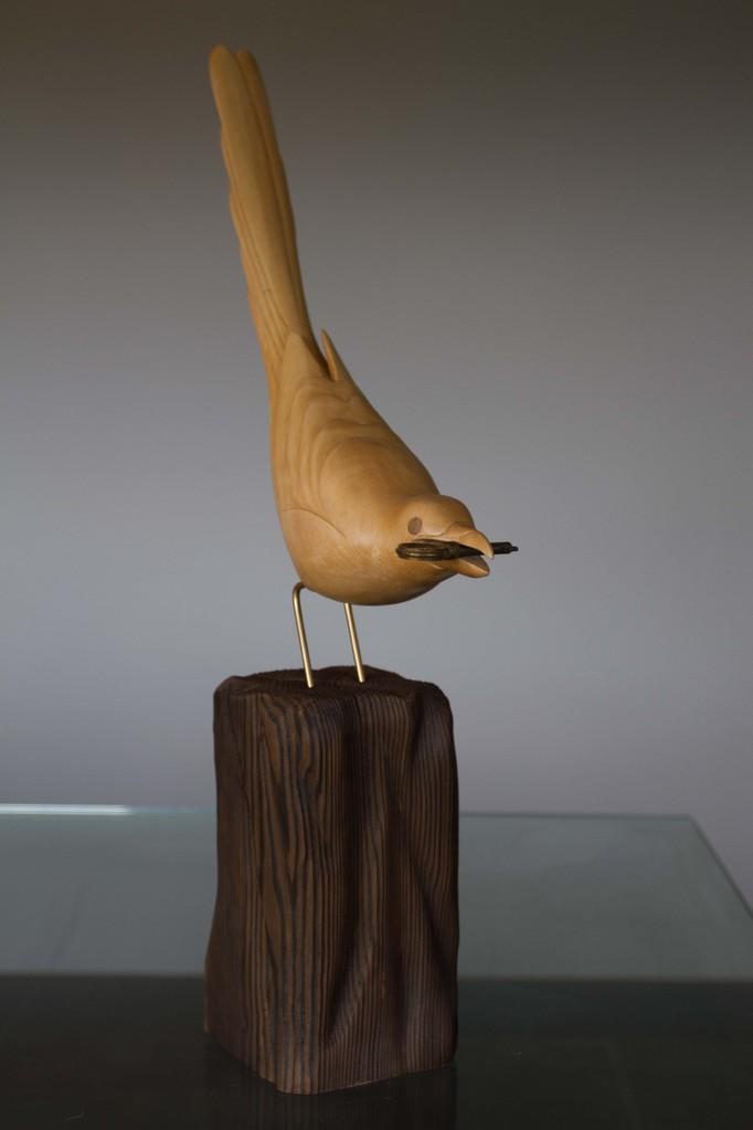 oiseau de bois: Pie voleuse