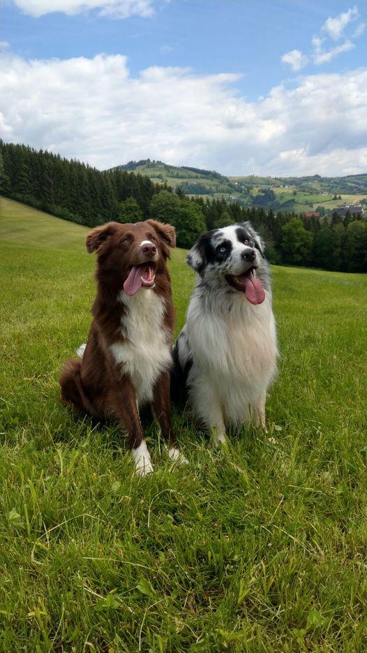 Pino & Dexter