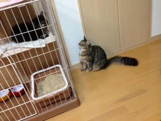 シェリーちゃんと先住猫のラムちゃん♪