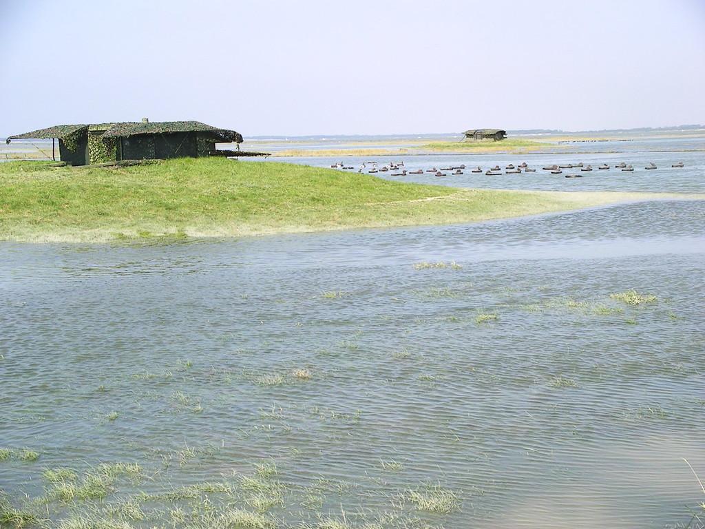 Hutte de chasse flottante à marée haute