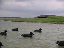 hutte de chasse en baie de somme