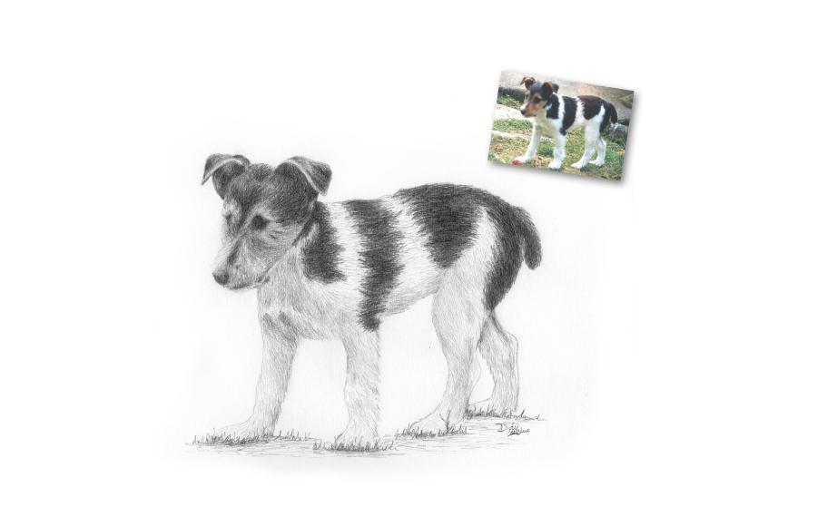 Portrait animalier - 2013 - Chien - Format A4 (21 x 29,7 cm)