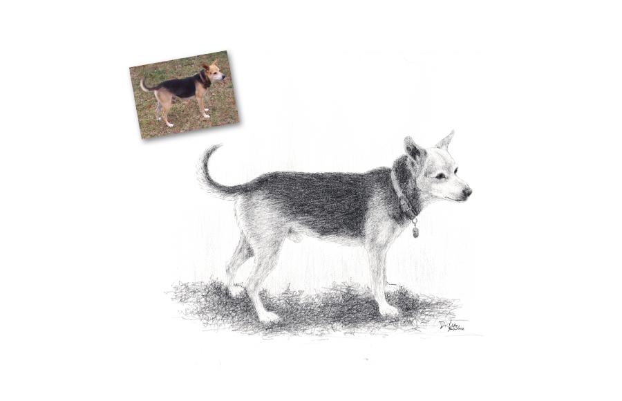 Portrait animalier - 2014 - Chien - Format A4 (21 x 29,7 cm)
