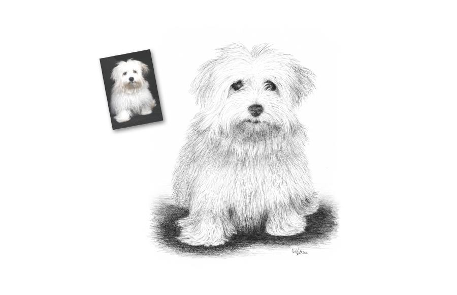 Portrait animalier - 2012 - Chiots - Format A4 (21 x 29,7 cm)