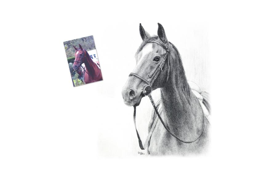 Portrait animalier - 2013 - Cheval - Format A4 (21 x 29,7 cm)