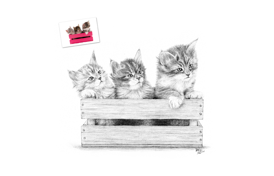 Portraits animaliers - 2012 - Chatons - Format A4 (21 x 29,7 cm)