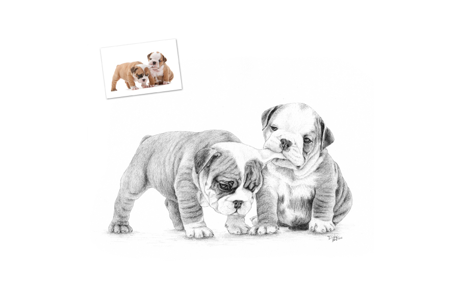 Portraits animaliers - 2012 - Chiots - Format A4 (21 x 29,7 cm)