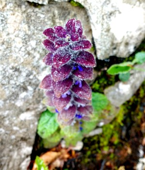Alpine flowers abound in Slovenia