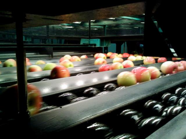 Das Herz der Sortiermaschine: Ein Computer mit Optik sortiert die Äpfel im Bruchteil einer Sekunde.