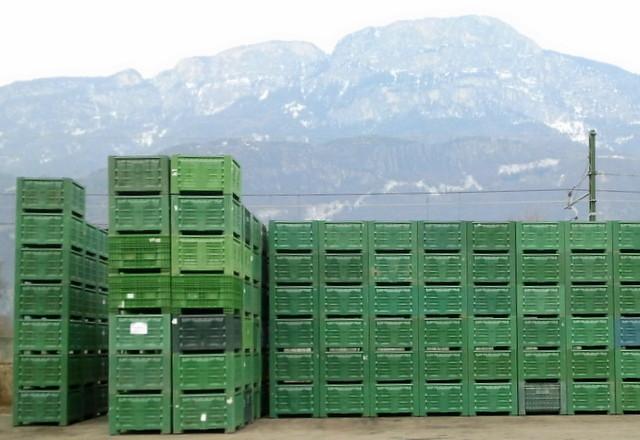 In Kisten wie diesen werden die Äpfel angeliefert. Wir pflücken die Äpfel vom Baum in einen Pflückkorb und leeren sie dann in eine dieser Plastikkisten. Eine Kiste hat ein Fassungsvermögen von etwa 300 bis 350 Kilogramm Äpfel.