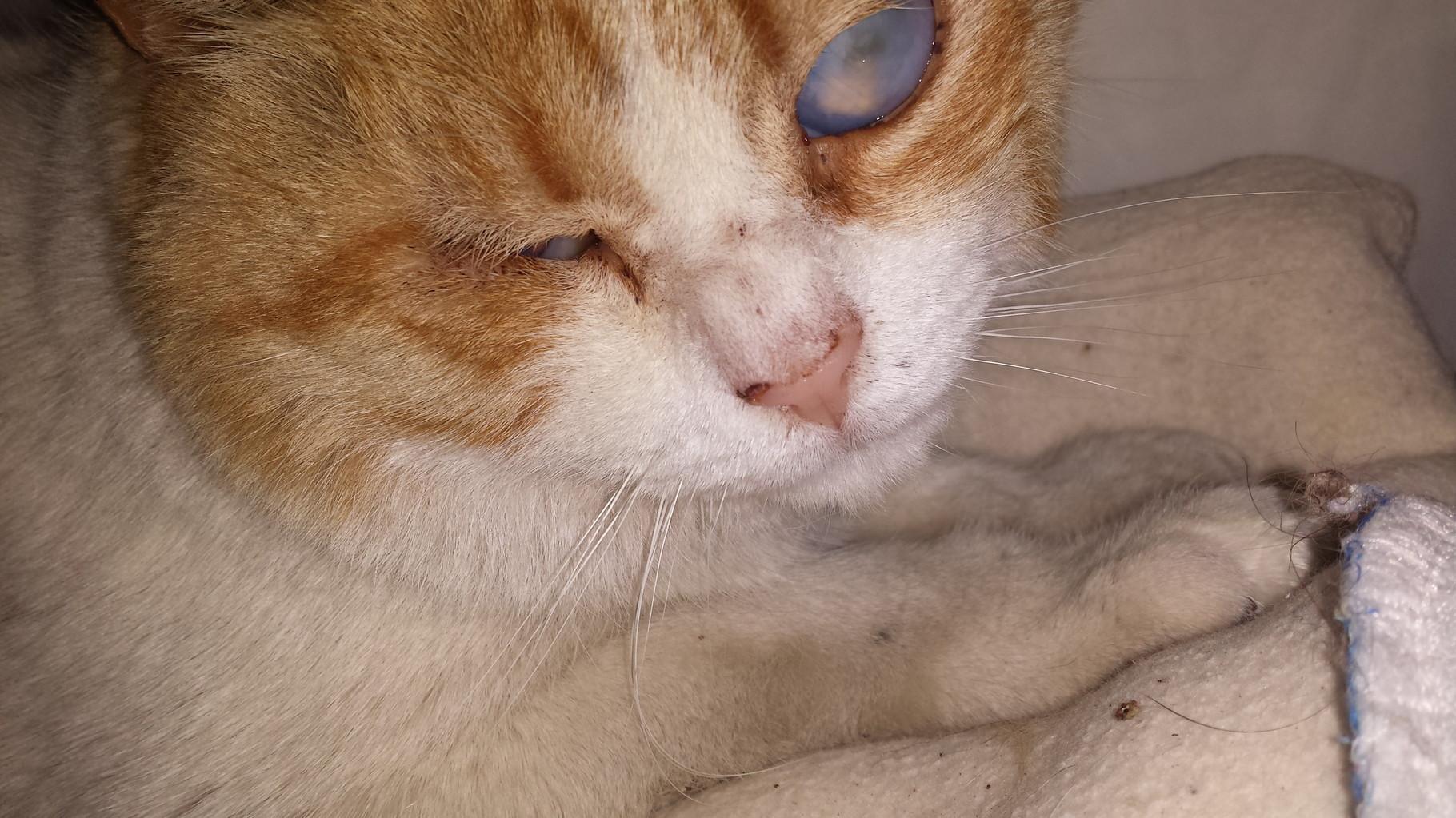 Simon antes de ser operado