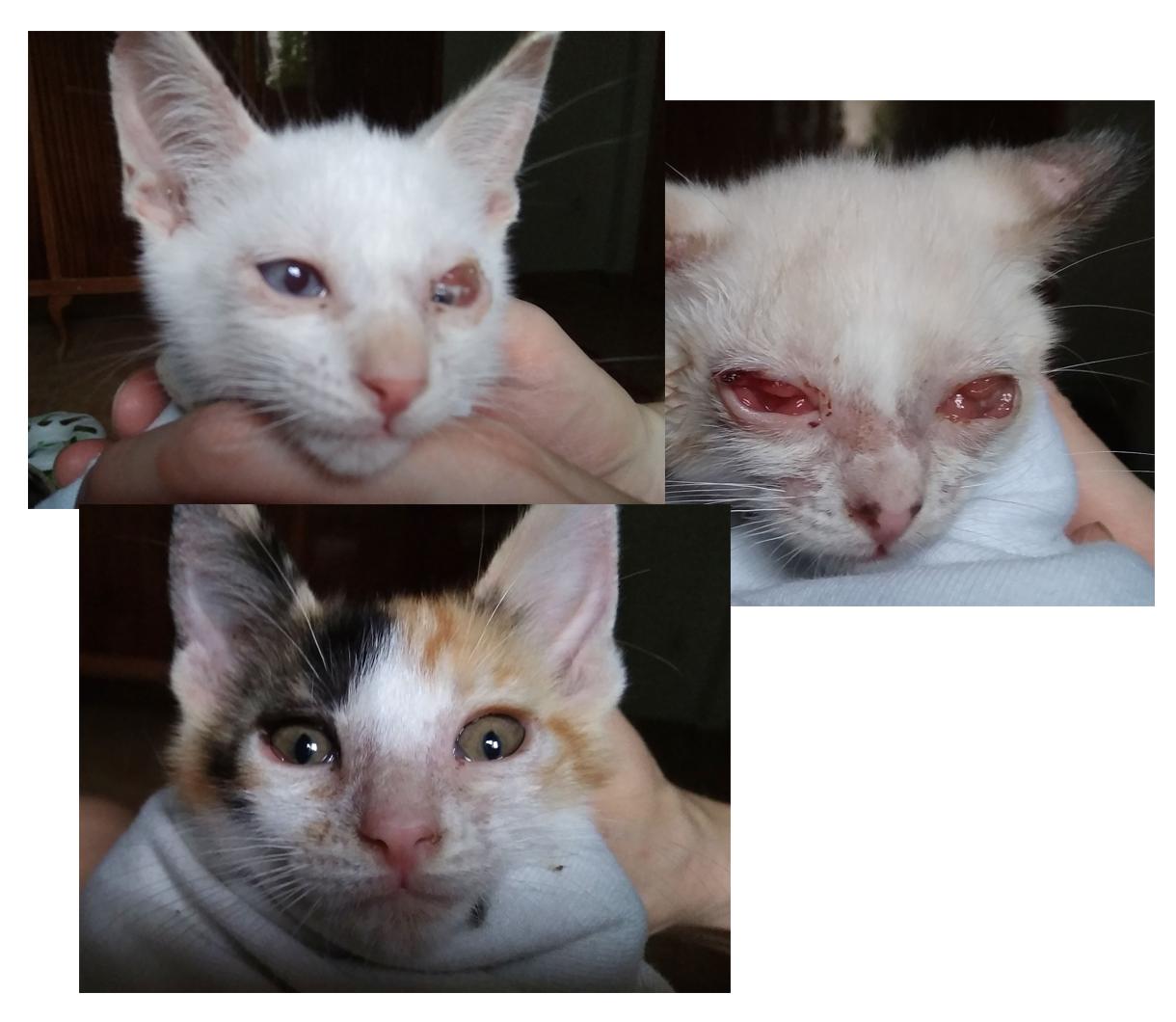 Donación medicación ojitos gatos