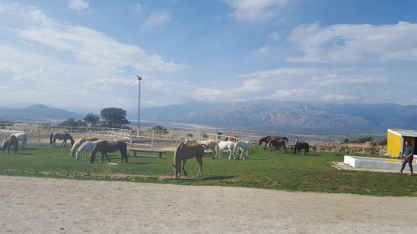 caballos y ponys disfrutando del sol