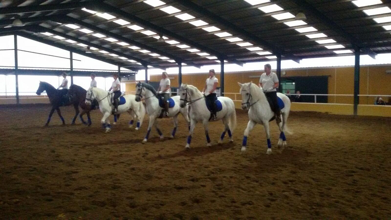 Exhibición equina - elegantes, grandiosos , bellisimos ... los caballos