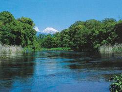 車で約10分に位置する湧水「柿田川」